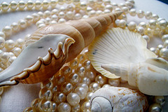 pearls-and-shells.jpg